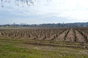 Pessac Leognan Vineyards