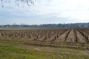 Pessac Leognan Vineyards